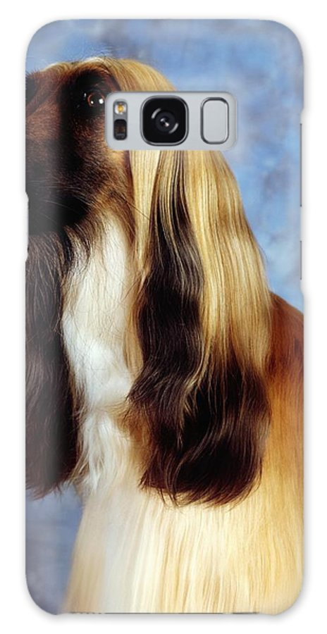 Animals Galaxy S8 Case featuring the photograph Afghan Hound by The Irish Image Collection