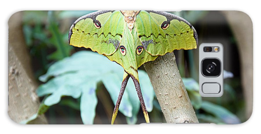 Antenna Galaxy S8 Case featuring the photograph African Moon Moth 1 by Andee Design