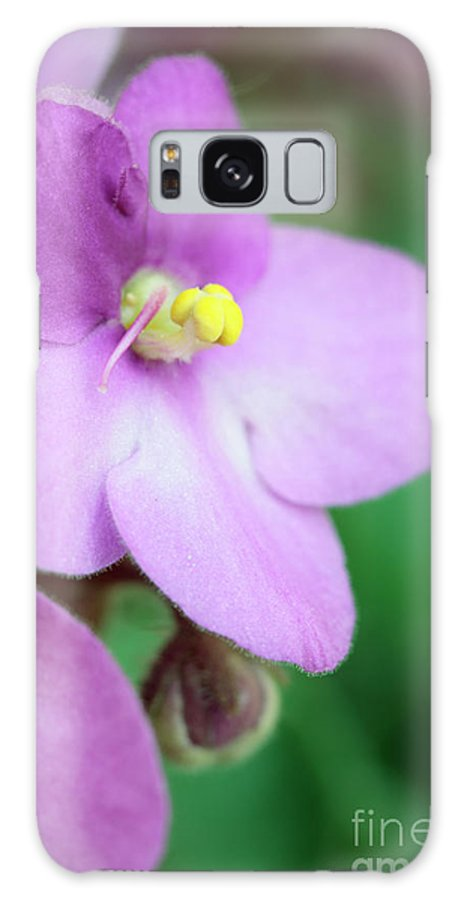 Saintpaulia Galaxy S8 Case featuring the photograph African Violet Flower by Neil Overy