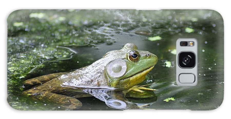 Frog Galaxy S8 Case featuring the photograph American Bull Frog by Bill Cannon