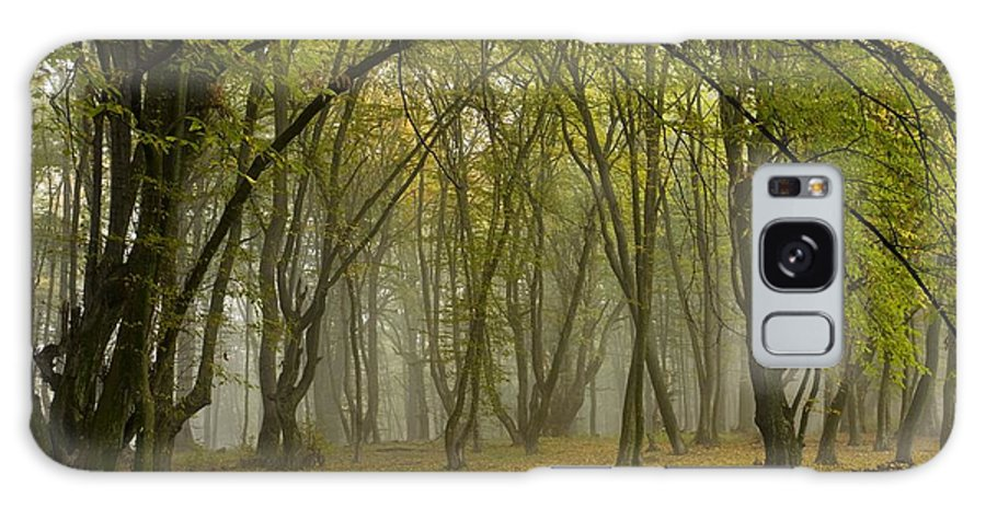 Ancient Galaxy S8 Case featuring the photograph Ancient Wood Pasture by Bob Gibbons