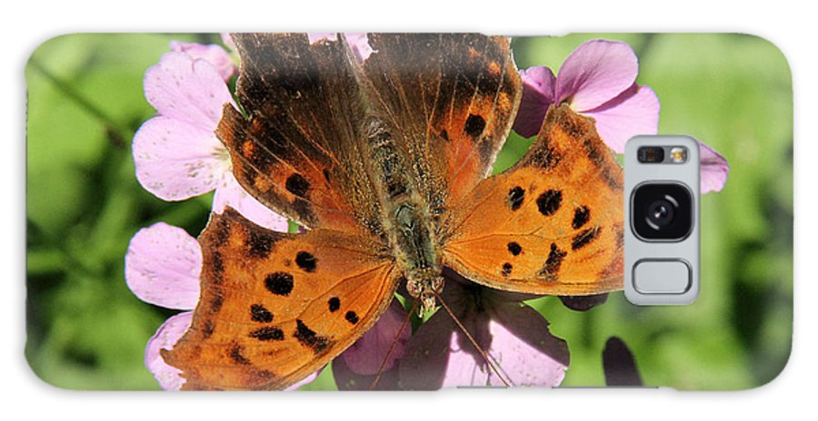 Anglewing Galaxy S8 Case featuring the photograph Anglewing Butterfly by Doris Potter