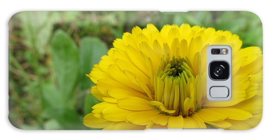 Flowers Galaxy S8 Case featuring the photograph Another Many Yellow Petals by Tina M Wenger