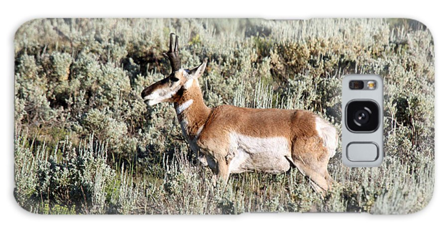Antelope Galaxy S8 Case featuring the photograph Antelope In Lamar Valley by Shawn Naranjo