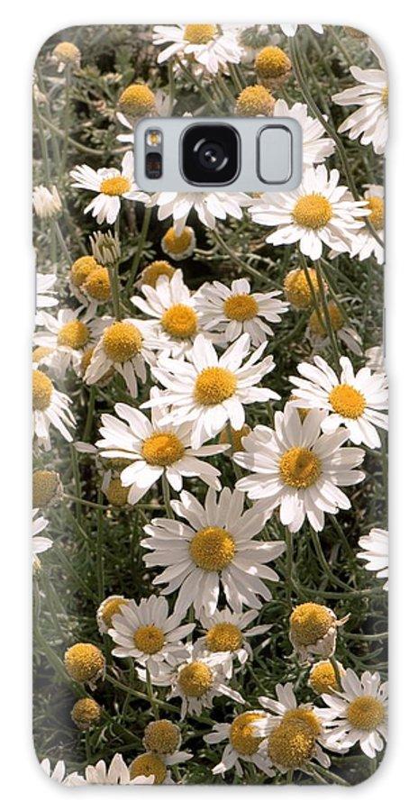 Anthemis Carpatica Karpaten Schnee Galaxy S8 Case featuring the photograph Anthemis Carpatica 'karpaten Schnee' by Adrian Thomas