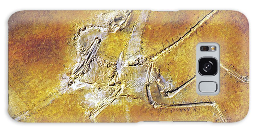 Fossil Galaxy S8 Case featuring the photograph Archaeopteryx Lithographica by Photo Researchers