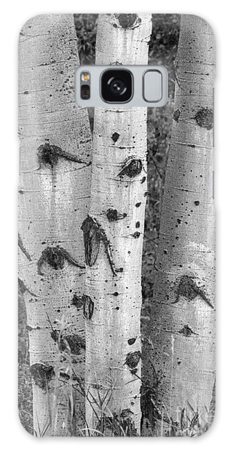 Grand Teton Galaxy S8 Case featuring the photograph Aspen Trees by Sandra Bronstein