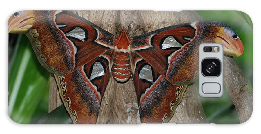Moth Galaxy S8 Case featuring the photograph Australian Moth by Richard Bryce and Family