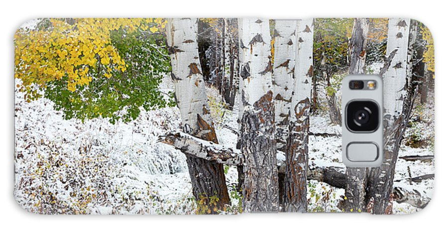 Idaho Galaxy S8 Case featuring the photograph Autumn Aspens And Snow by D Robert Franz