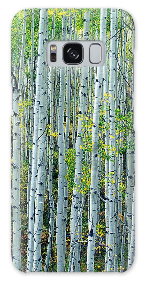 Gold Galaxy S8 Case featuring the photograph Autumn Aspens by D Robert Franz