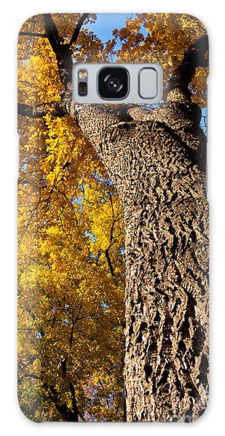 Autumn Season Galaxy S8 Case featuring the photograph Autumn Colors by Terry Elniski