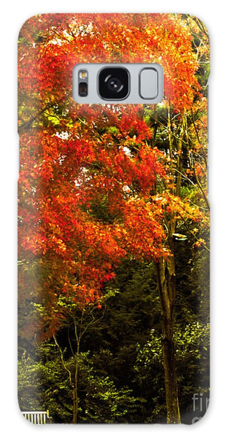 Bench Galaxy S8 Case featuring the photograph Autumn Fall Tree In Purchase New York by Carol F Austin