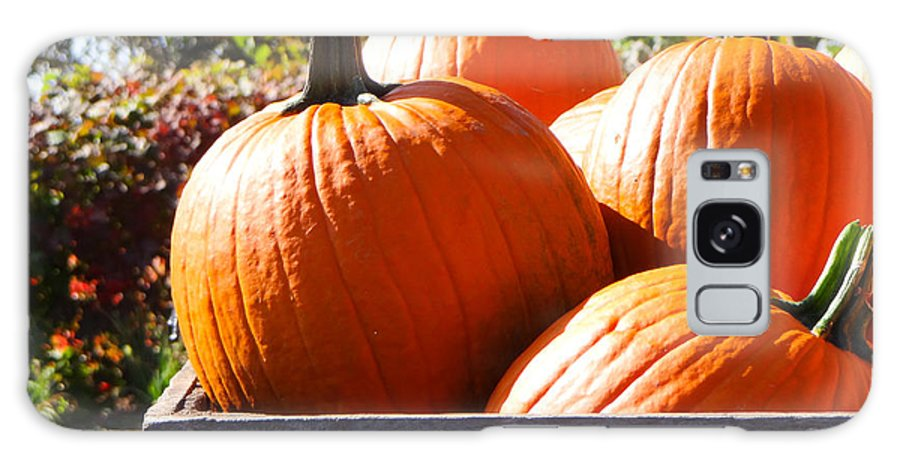 Edwards Apple Orchard Galaxy S8 Case featuring the photograph Autumn Harvest by Julia Wilcox