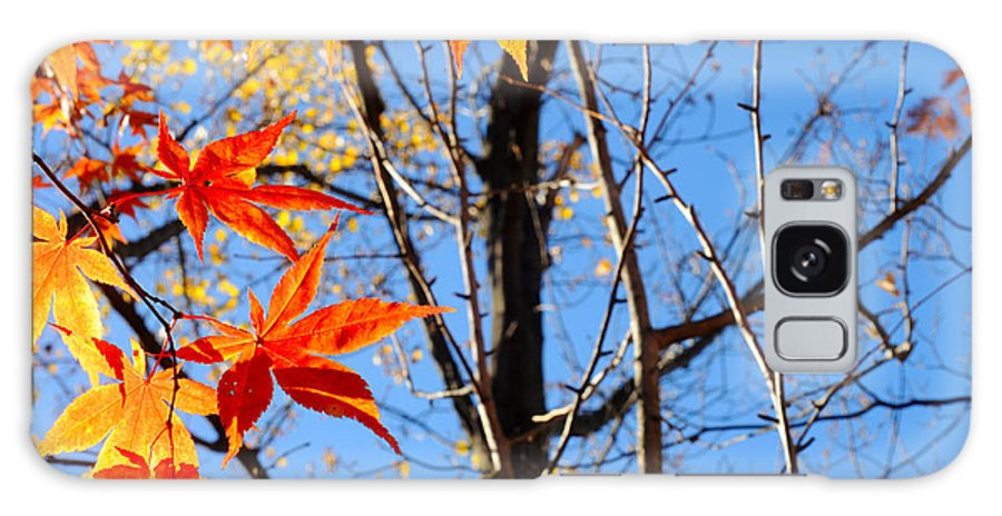 Leaves Galaxy S8 Case featuring the photograph Autumn Leaves by Kenneth Sponsler