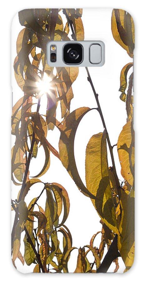 Autumn Galaxy S8 Case featuring the photograph Autumn Sunburst by Ian Middleton