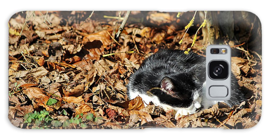 Cat Galaxy S8 Case featuring the photograph Autumn Sweet Autumn by Cedric Darrigrand