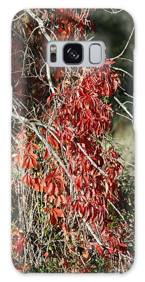 Autumn Galaxy S8 Case featuring the photograph Autumns Red Vines by Shawn Naranjo