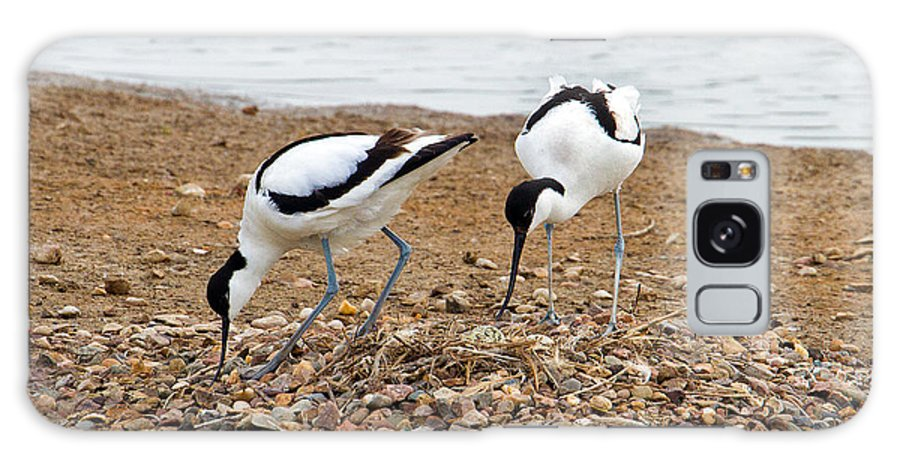 Birds Galaxy S8 Case featuring the photograph Avocets At Nest by Bob Kemp