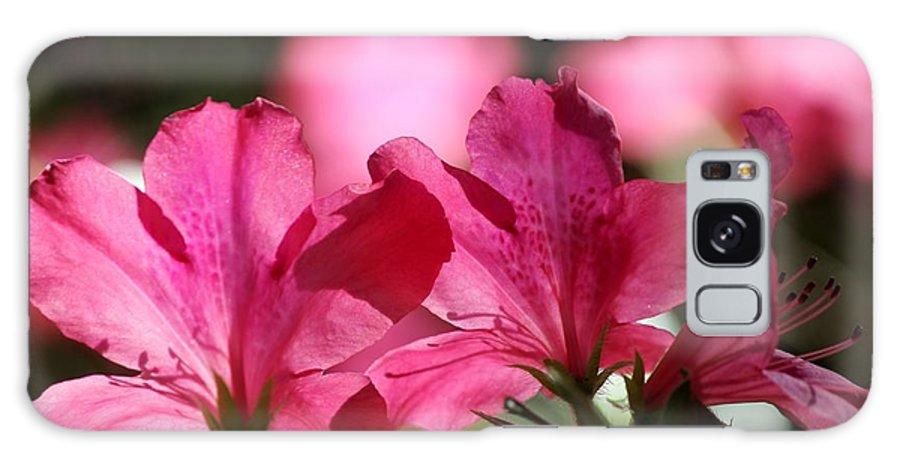 Azaleas Galaxy S8 Case featuring the photograph Azalea Blossoms by Theresa Willingham