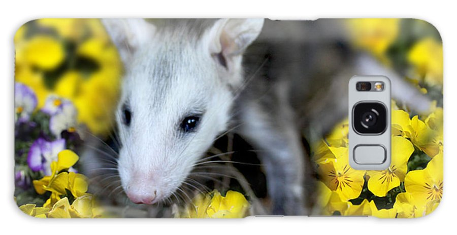 Baby Galaxy S8 Case featuring the photograph Baby Opossum In Flowers by Diana Haronis