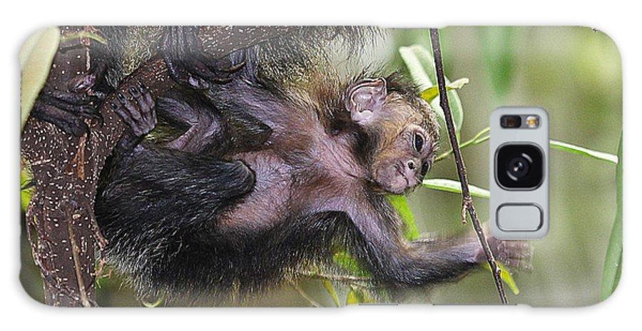 Mom Galaxy S8 Case featuring the photograph Baby Sak-monkey by Elizabeth Hart