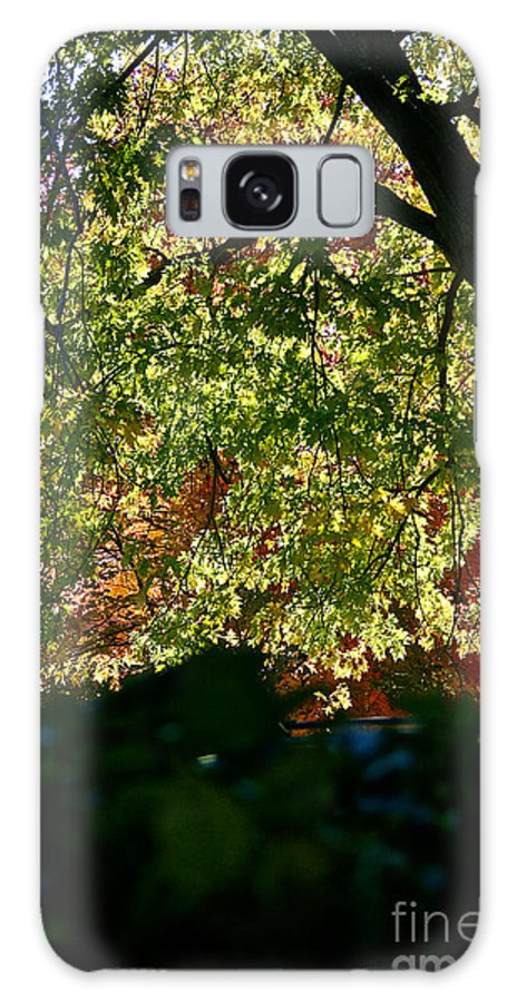 Tree Galaxy S8 Case featuring the photograph Backlit Autumn by Susan Herber