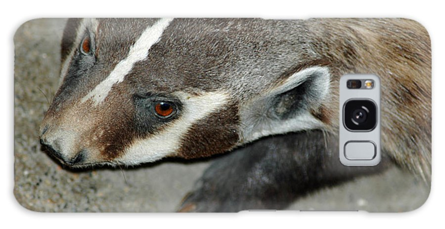 Usa Galaxy S8 Case featuring the photograph Badger On The Loose by LeeAnn McLaneGoetz McLaneGoetzStudioLLCcom