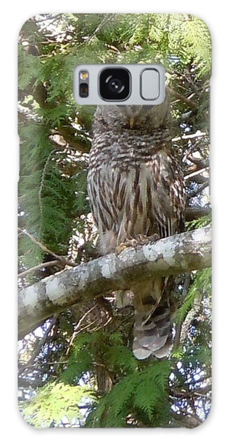 Birds Galaxy S8 Case featuring the photograph Barred Owl by Francine Frank