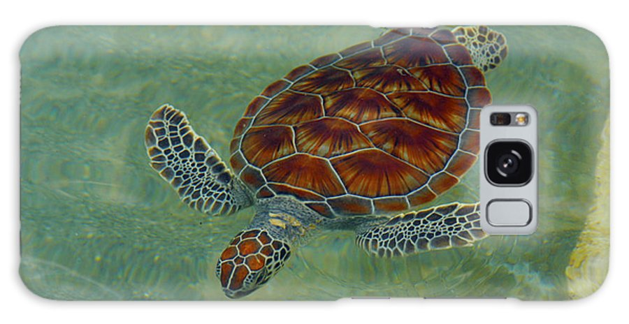 Sea Turtle Galaxy S8 Case featuring the photograph Beautiful Sea Turtle by Stacey Robinson