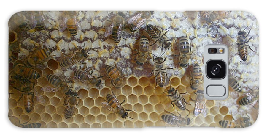 Bug Galaxy S8 Case featuring the photograph Bee Hive by Nina Fosdick