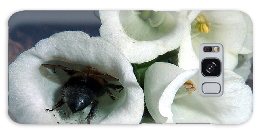 White Lupin Flower With Bee Galaxy S8 Case featuring the photograph Bee Inside Lupin by Baato