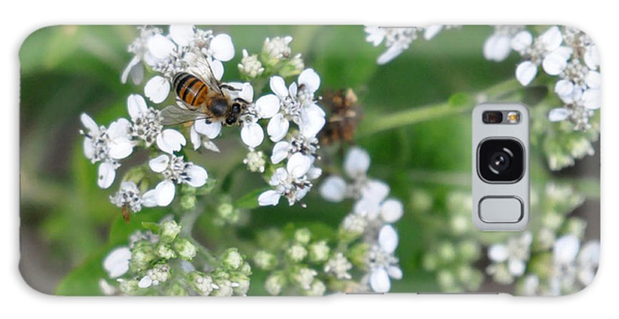 Teresa Blanton Galaxy S8 Case featuring the photograph Bee Of The White Flower by Teresa Blanton