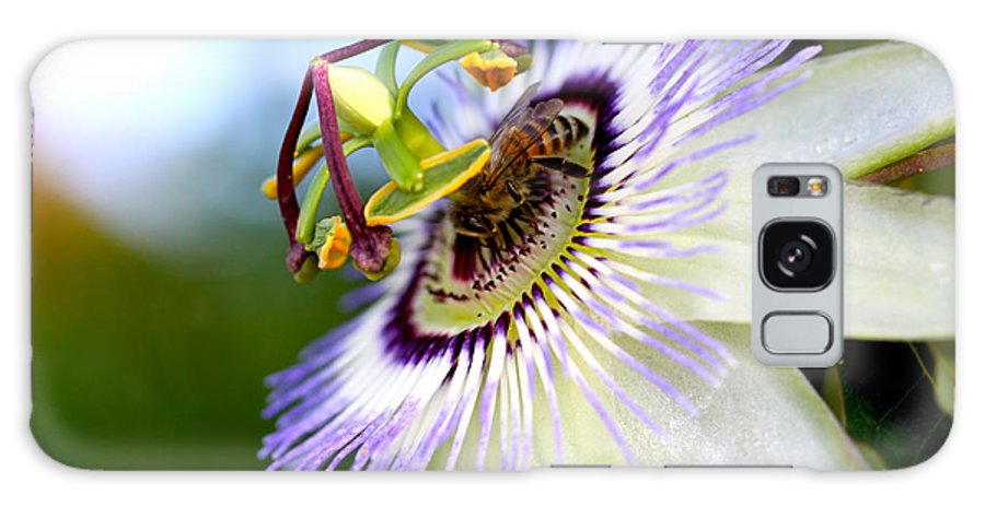 Nigella Galaxy S8 Case featuring the photograph Bee On A Nigella by Diana Haronis
