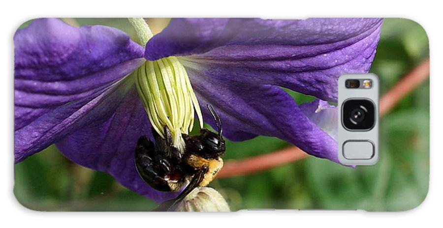Bee Galaxy S8 Case featuring the photograph Bee On Flower by Alan Hutchins
