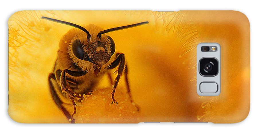 Bee Galaxy S8 Case featuring the photograph Bee On Squash Flower by Jack Schultz