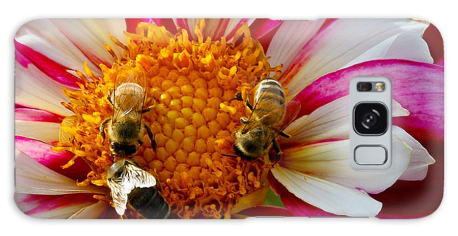 Dahlia Galaxy S8 Case featuring the photograph Bee Time by Jean Noren