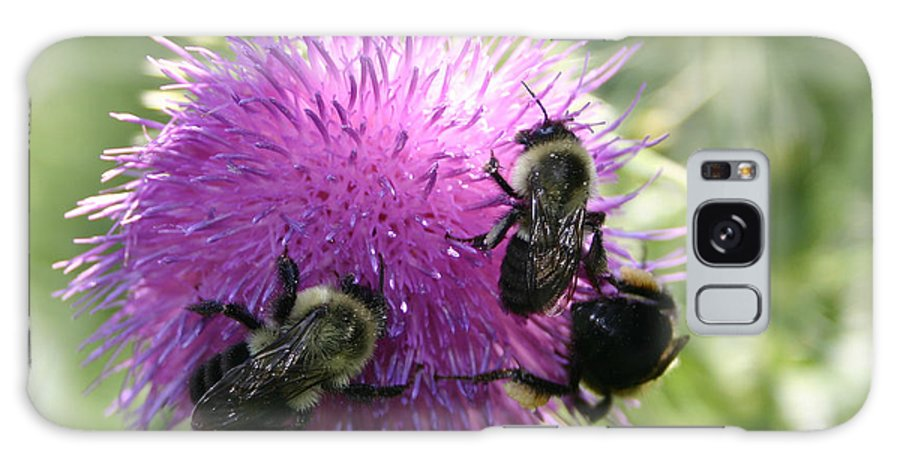 Bug Galaxy S8 Case featuring the photograph Bees On Thistle by Nina Fosdick