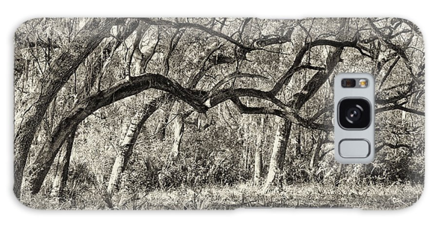 Beaufort County Galaxy S8 Case featuring the photograph Bent Trees Sepia Toned by Phill Doherty