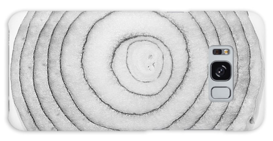 'bermuda Onion' Galaxy S8 Case featuring the photograph Bermuda Onion Spiral Bw by James BO Insogna