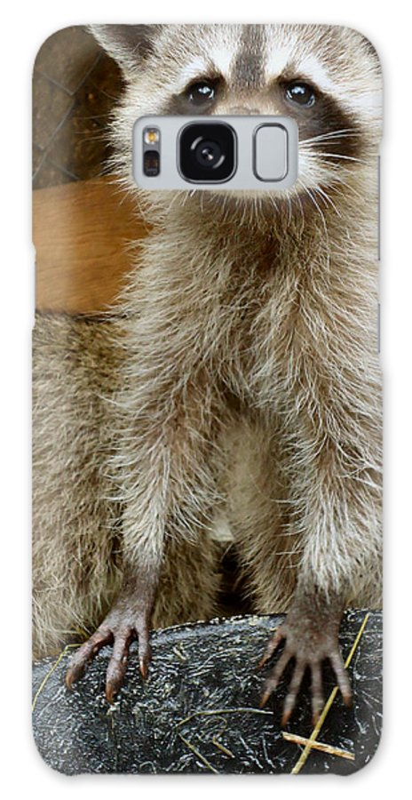 Raccoon Galaxy S8 Case featuring the photograph Big And Tall by Art Dingo
