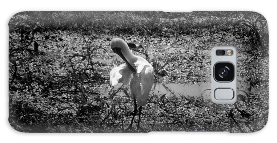 Spoonbill Galaxy S8 Case featuring the photograph Billabong V5 by Douglas Barnard