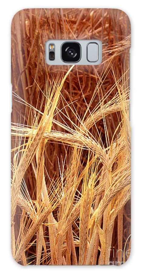 Bioengineered Barley Galaxy S8 Case featuring the photograph Bioengineered Barley by Science Source