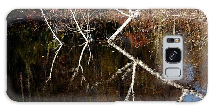 Usa Galaxy S8 Case featuring the photograph Birch Reflections by LeeAnn McLaneGoetz McLaneGoetzStudioLLCcom