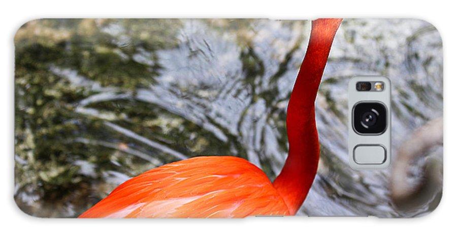 Flamingo Galaxy S8 Case featuring the photograph Bird Bath by Elizabeth Hart