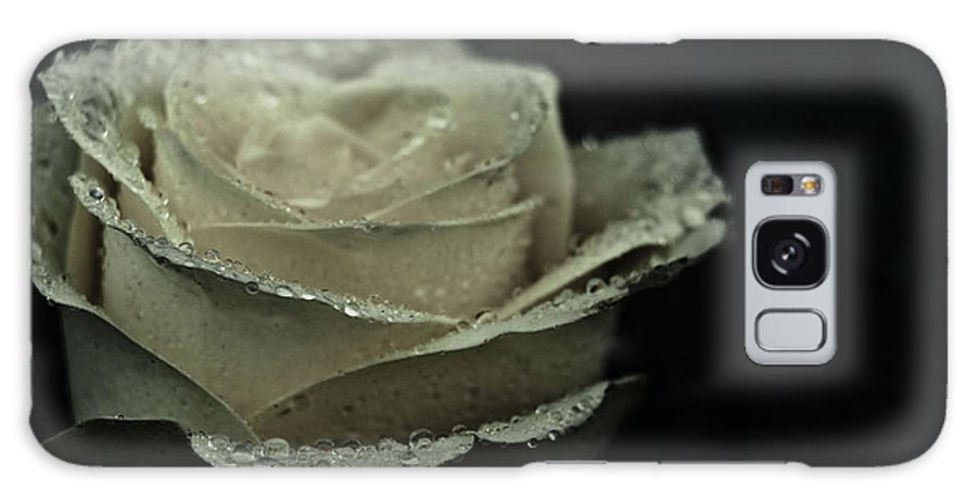 Rose Galaxy S8 Case featuring the photograph Birthday Rose by Grebo Gray