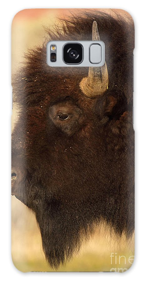American Bison Galaxy S8 Case featuring the photograph Bison In Profile by Max Allen