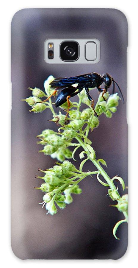 Black Galaxy S8 Case featuring the photograph Black Flower Feeding Wasp by Douglas Barnett