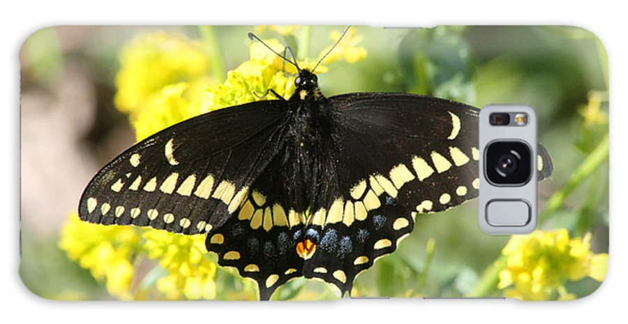 Galaxy S8 Case featuring the photograph Black Swallowtail by Mark J Seefeldt