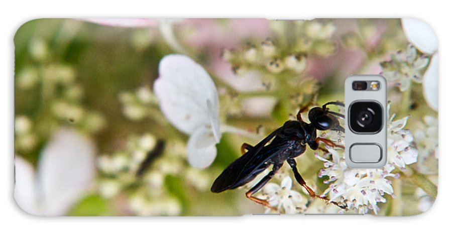 Black Galaxy S8 Case featuring the photograph Black Wasp 1 by Douglas Barnett