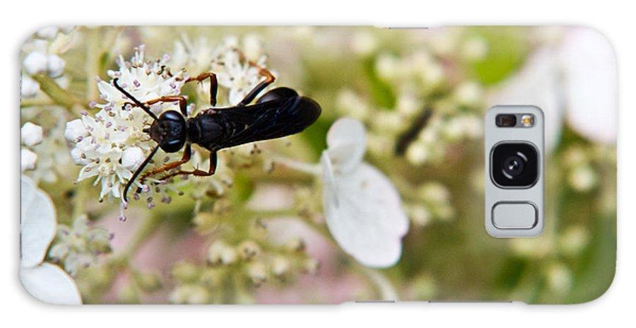 Strange Galaxy S8 Case featuring the photograph Black Wasp 2 by Douglas Barnett